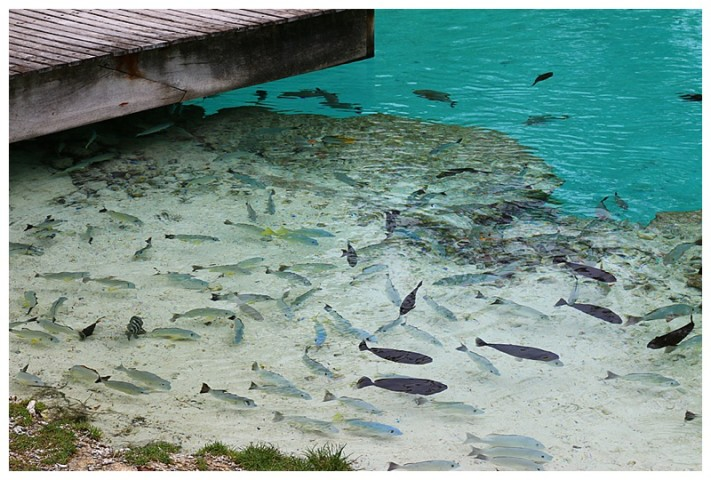 Fish galore in the lagoon