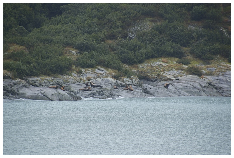 Henke Island, Disenchantment bay and a sea-lion rookery